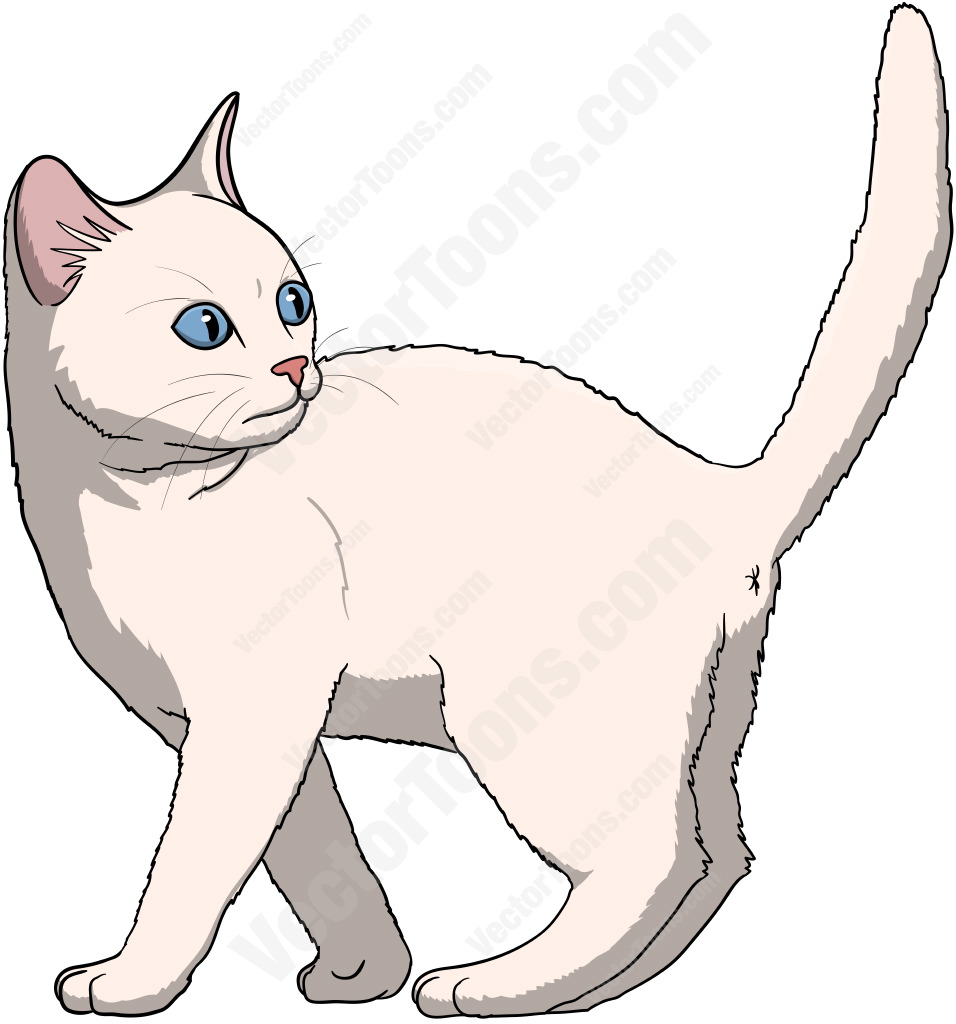 White kitten with blue eyes standing with its tail up looking back