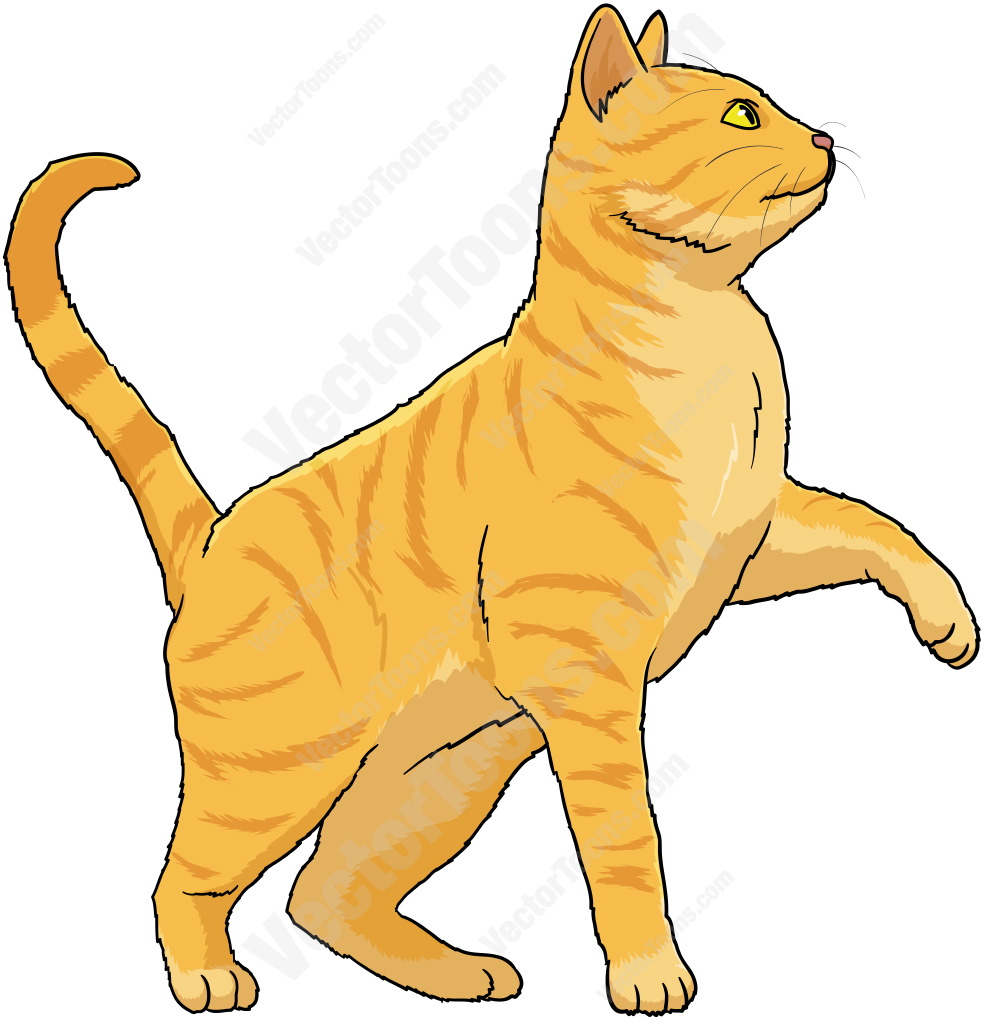 Orange cat with yellow eyes standing with one paw off the ground