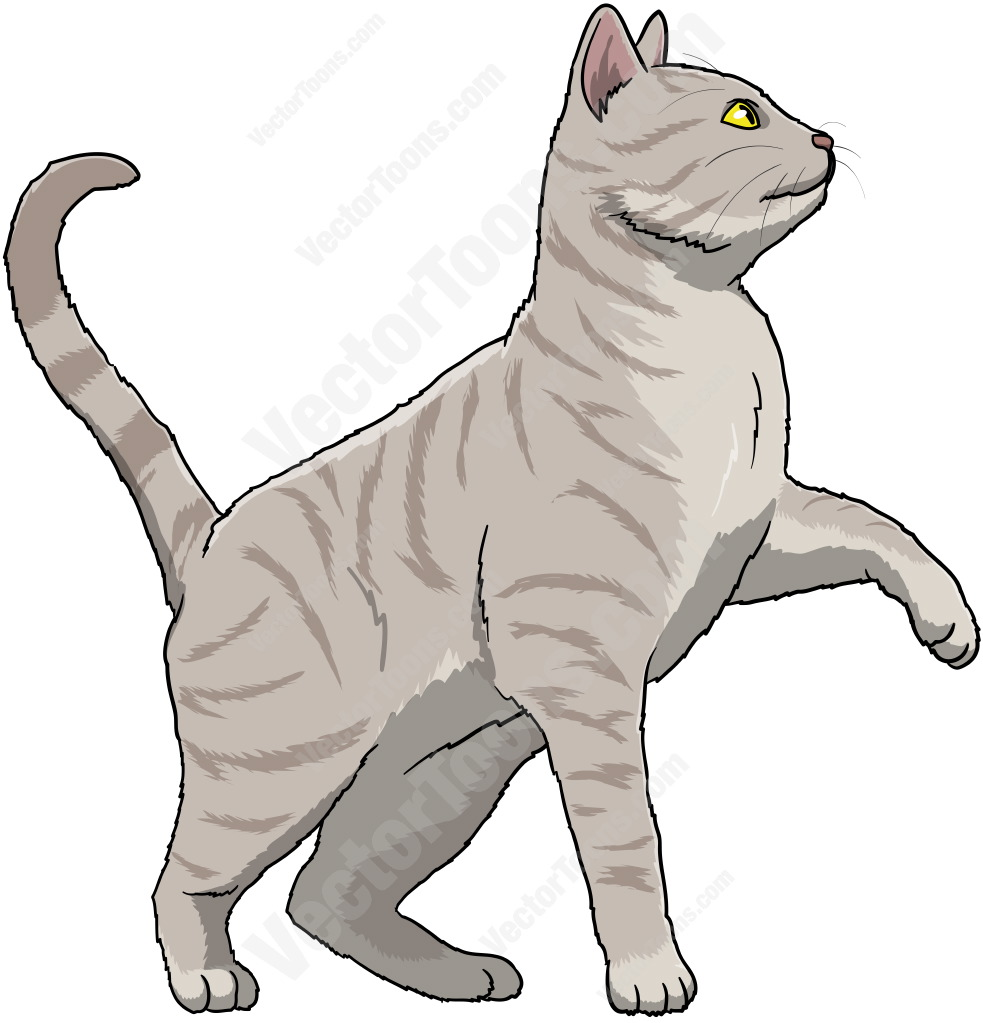 Grey cat with yellow eyes standing with one paw off the ground