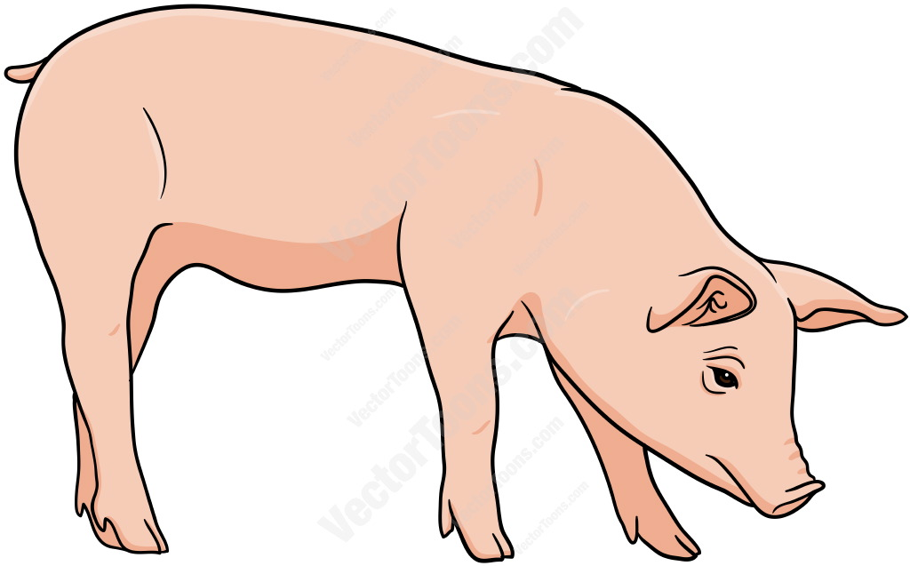 Pink pig standing with its head down