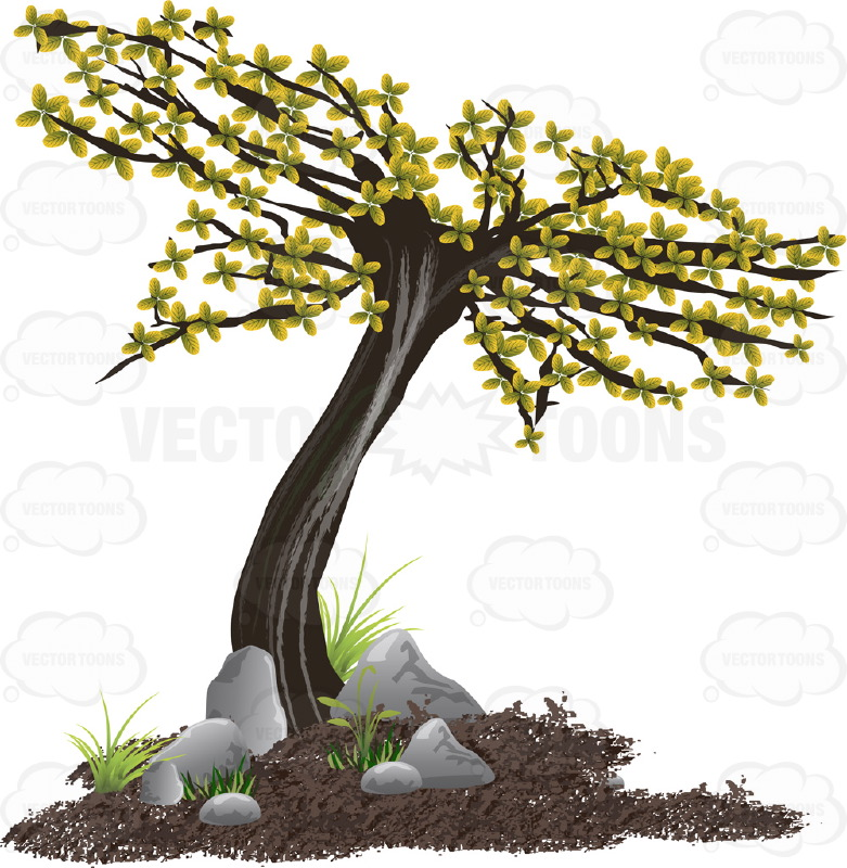 Green Leaves On Curved Young Tree  Surrounded By Brown Dirt, Green Grass And Rocks