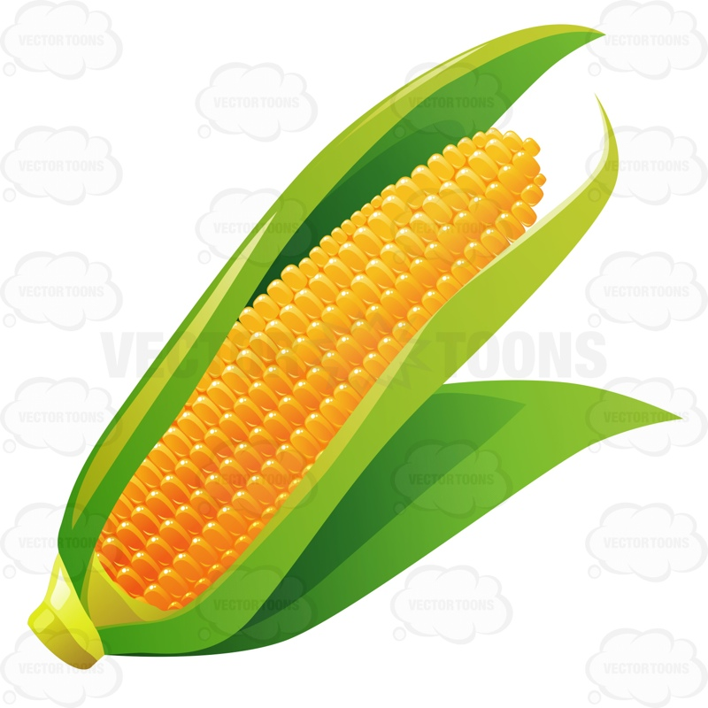 Cartoon Corn On The Cob Corn on the cob with leaves in