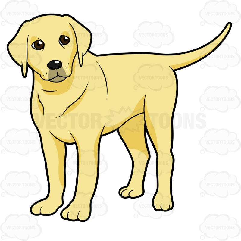 Yellow Labrador Standing And Looking To The Side • Vector ...